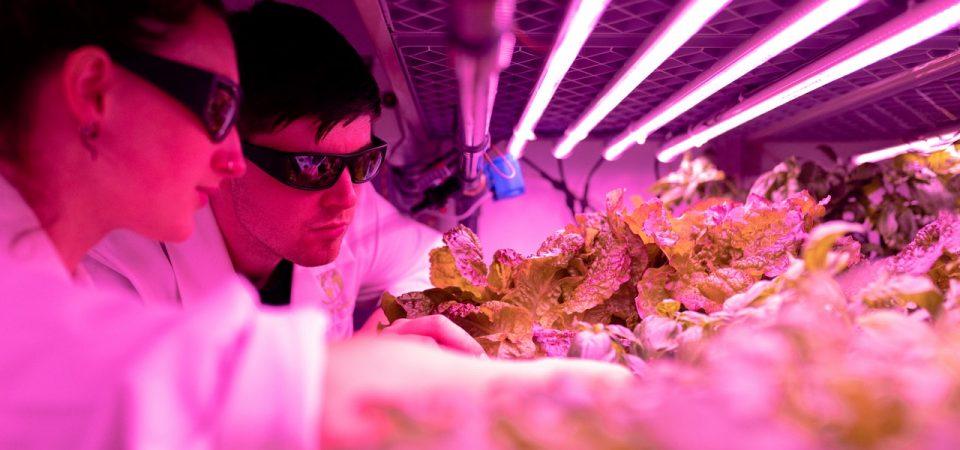 Smartfarming – Have You Heard of It?