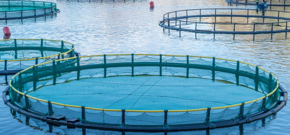 Everything You Need to Know on Aquaculture
